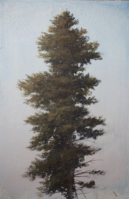 Peter Hoffer, Pine 2 Clay and Pigment on Linen