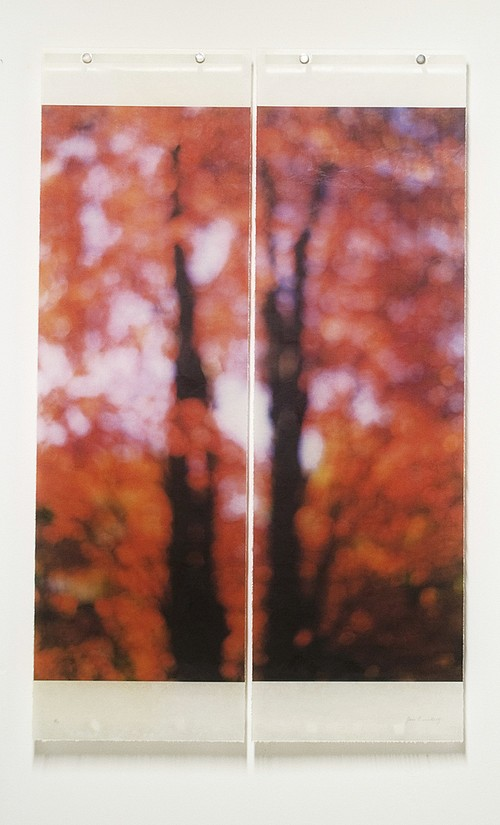 Jeri Eisenberg, Sugar Maple (Red) 2005, Archival Pigment Print